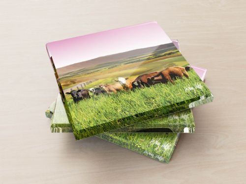 Rolling Hills With Cows Pink - Glass Coasters